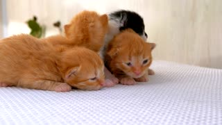 Infant feathery cats 2021