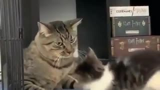 Kittens of world 2021