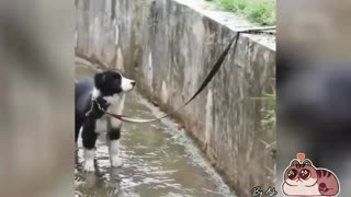 Dog rescuing a puppy