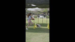 Dog training with our pet animals