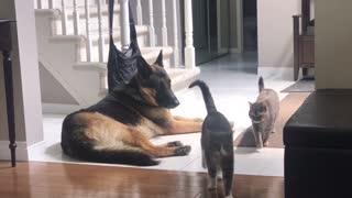 Cat Caught Cuddling with Dog