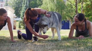 TOP 10 Awesome Commands Every Dog Should Know! Basic Dog Training