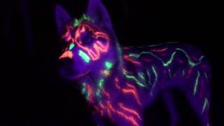 Spirit Guide Husky