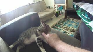Lila Cat - Loves pat