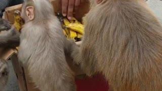 Feeding monkey at lockdown