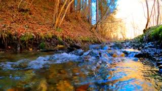 Nature Scene Video