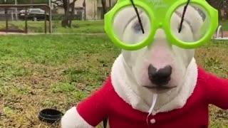 Totally Festive Terrier