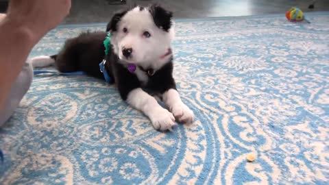 Useful Basic Fundamentals In Dog Training