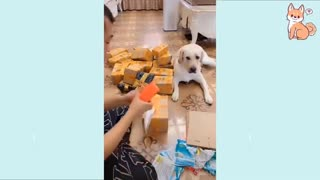 Cute Dogs, Funny To Watch.