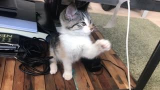 Very Cute Kitten Playing