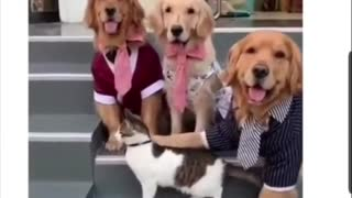 three dogs and one cat