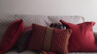 Pillow Fort renovation