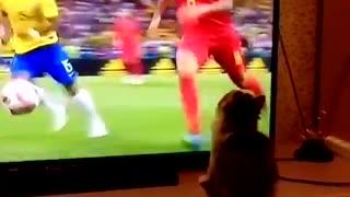 Funny kitten watching football