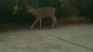 Deer Friends