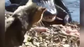 Best funny videos moments