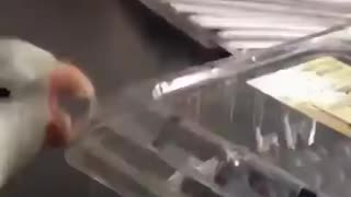 Funny parrot trying to have a quick snack😂😂