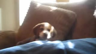 Puppy Quickly Learns To Howl! ☺
