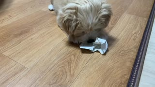 The cute dog general playing with paper