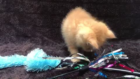 New Lovly Toy For My Kitten