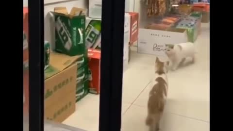 Sneaky cat is sneaky. Also a thief