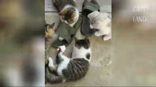 Cat Memes - Cat video