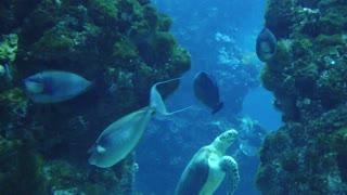 Strange fish in the ocean
