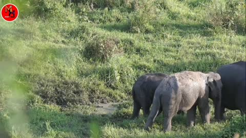 Elephant joss video