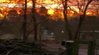 Dogs with bird sound in the forest
