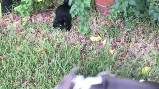 Pup Conquers Fear of Cats