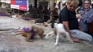 Dog playing with little monkey