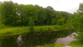 Two Dozen Canadian Geese Swimming on a Stream | Maine | GoPro Hero 9