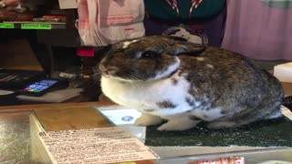 Adorable Bunny Helps at the Checkout