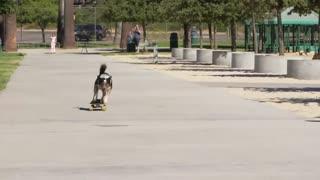 Fastest skateboarding dog - World Records