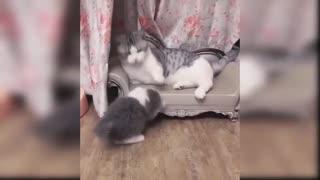 Cute cats having fun