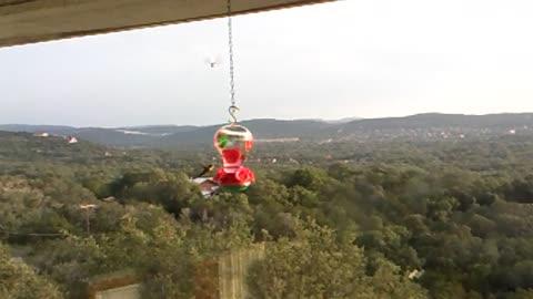 Hummingbirds in Helotes, Texas