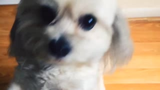 A cute dog wanting attention