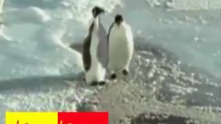 A Penguin Dropped In Water