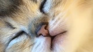 Sweet dreams of kittens after lunch