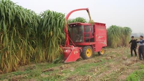 napier silage forage harvester king grass cutter machine 9QZ-2100