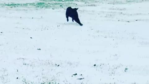 Johnny Cash's first snow