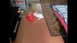 Rabbit with ballon what gonna happen
