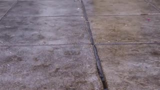 Brown puppy dog playing on wet tiles outside