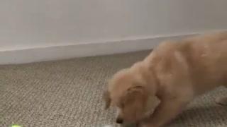 Adorable perrito :)