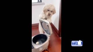 dog showing his skills