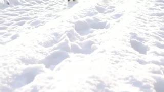 cat walking through the snow