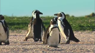 Teach your children about penguins ANIMAL FOR KIDS