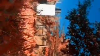 Beautiful video about nature