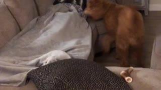 Owner Pranks Dog By Hiding