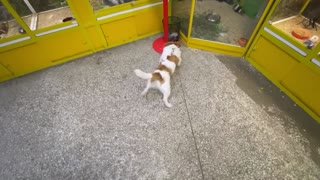 Jack Russell wants to befriend every single animal at the pet store