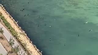 animales nadando en la bahía